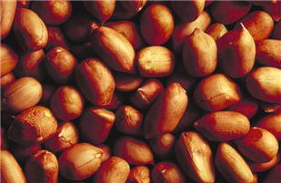 Peanuts_USDA